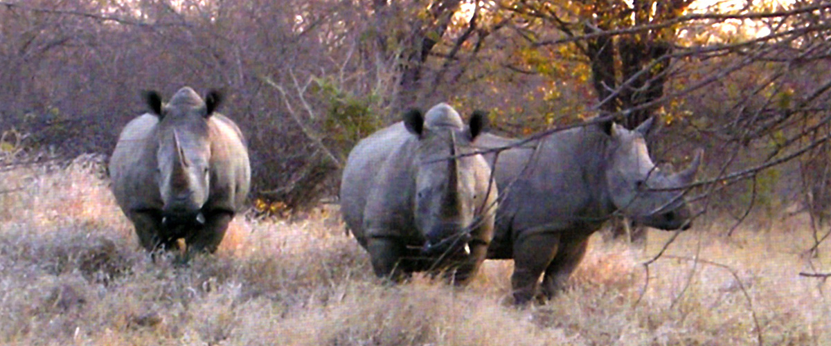The WWF/Beit Trust Rhino Conservation Project